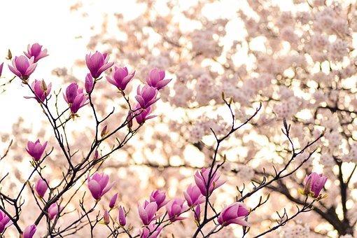 La Primavera: il grande risveglio !